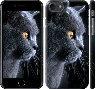Чехол на iPhone 8 Красивый кот