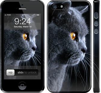 Чехол на iPhone SE Красивый кот