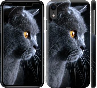 Чехол на iPhone XR Красивый кот