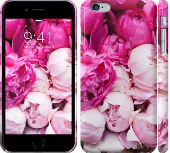 Чехол на iPhone 6 Plus Розовые пионы