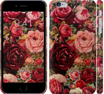 Чехол на iPhone 6 Plus Цветущие розы