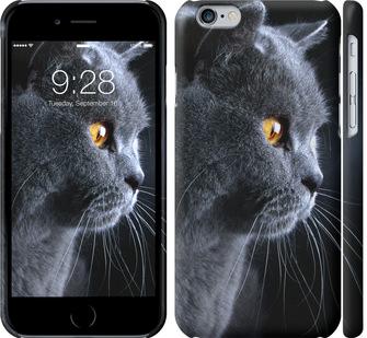 Чехол на iPhone 6 Красивый кот