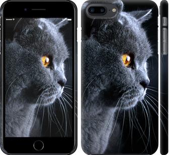 Чехол на iPhone 7 Plus Красивый кот