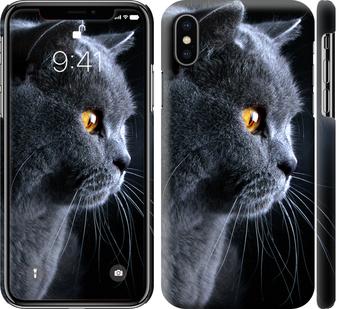 Чехол на iPhone XS Красивый кот