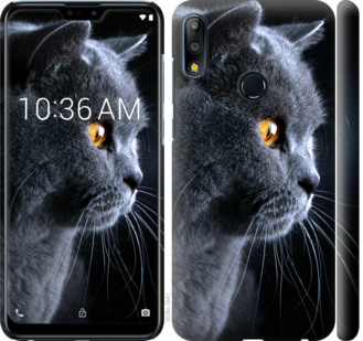 Чехол на Asus Zenfone Max Pro M2 ZB631KL Красивый кот