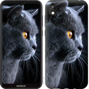Чехол на Huawei Honor 8S Красивый кот