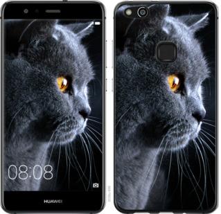 Чехол на Huawei P10 Lite Красивый кот