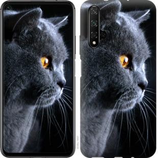 Чехол на Huawei Honor 20 Красивый кот