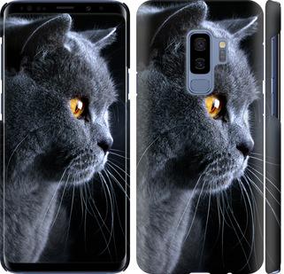 Чехол на Samsung Galaxy S9 Plus Красивый кот