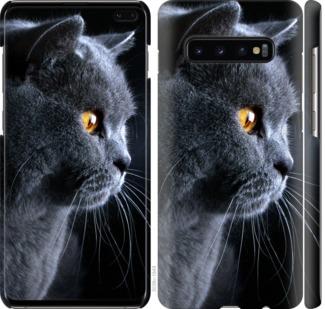 Чехол на Samsung Galaxy S10 Plus Красивый кот