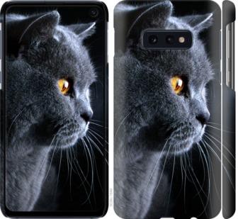 Чехол на Samsung Galaxy S10e Красивый кот