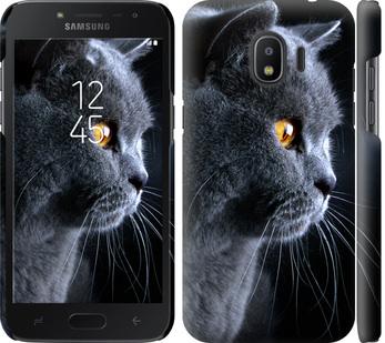 Чехол на Samsung Galaxy J2 2018 Красивый кот