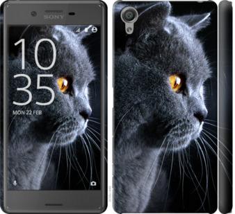 Чехол на Sony Xperia X F5122 Красивый кот