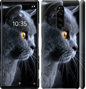 Чехол на Sony Xperia XZ4 Красивый кот