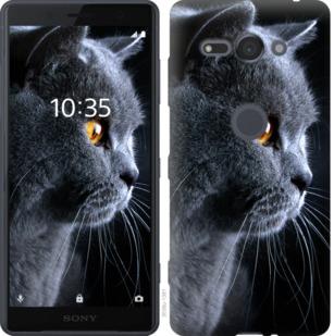 Чехол на Sony Xperia XZ2 Compact H8324 Красивый кот